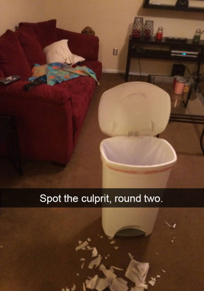 Hilarious Dog Snapchats Is All You Need To Get You Through The Day