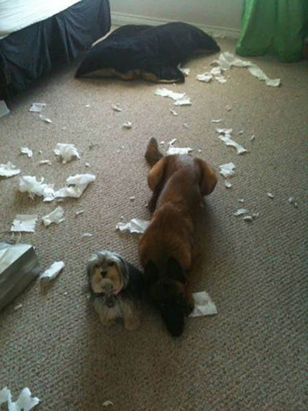 Sometimes Pets Are Cute Minions Of Destruction When Left Home Alone