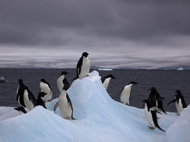 Interesting Facts About Antarctica That You Didn't Know
