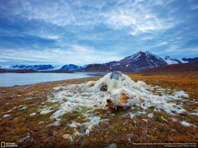 The Best Works From 2016 National Geographic Nature Photographer Of The Year Contest