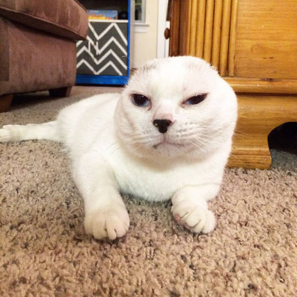 Heartwarming Story Of An Earless Deaf Cat Who Got Adopted And Helps His New Owner More Than She Could Expected