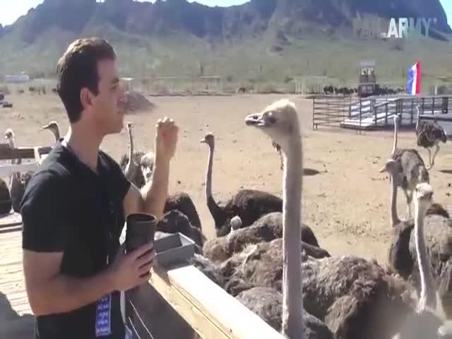 The Funniest Animal Fails On The Internet