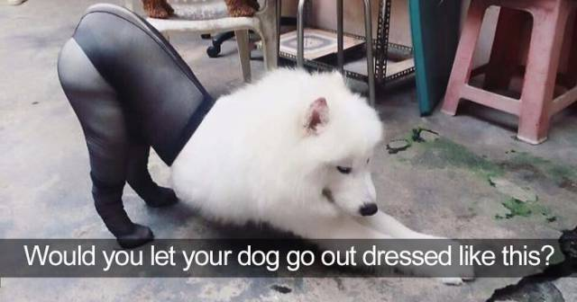The List Of The Funniest Tweets About Dogs