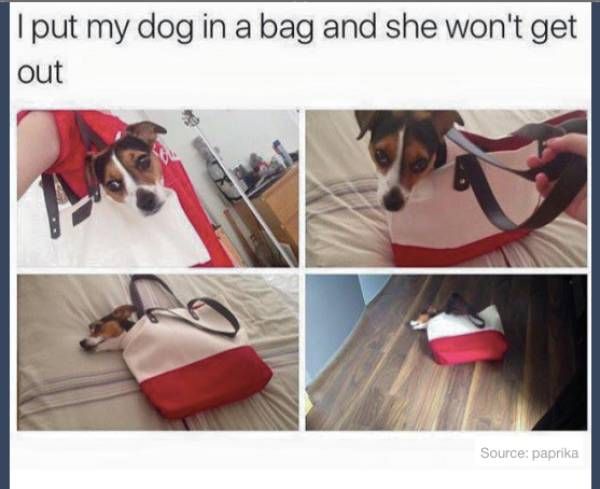 Great Animal Tumblr Posts That Will Make Your Day