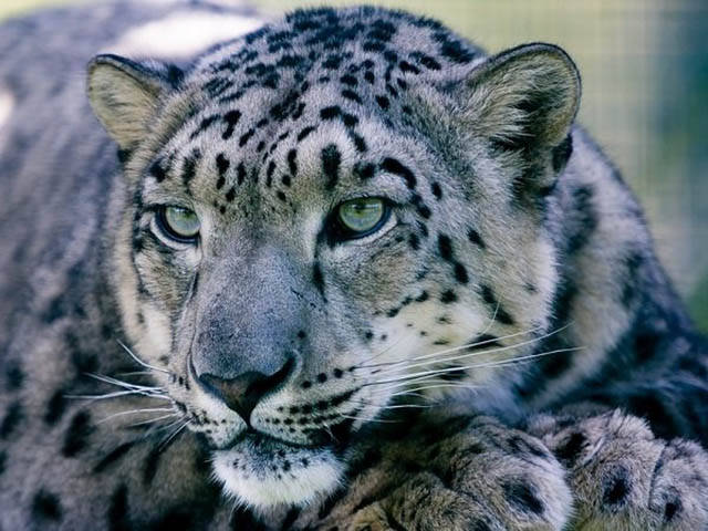 Animals That Represent Countries Around The World