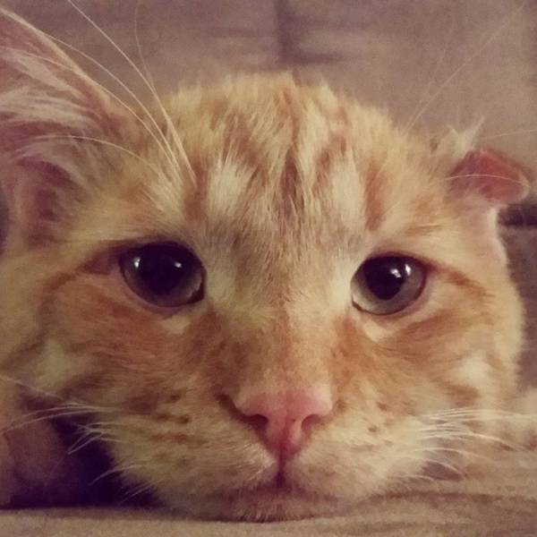 """Look At The Transformation Of """"The Saddest Cat"""" After He Was Adopted"""