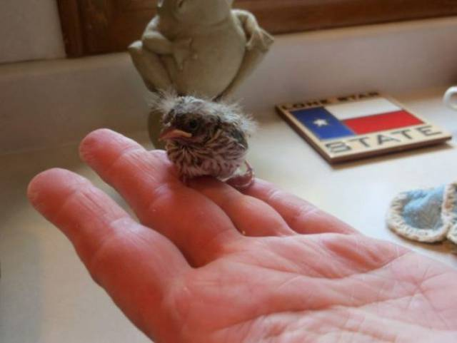 How A Veterinarian Was Saving A Tiny Birdie