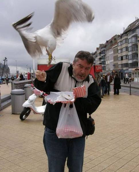 People Who Nailed Perfect Timed Photos
