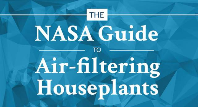 NASA Published A List Of Air-Filtering Plants That Are Best For Your Home