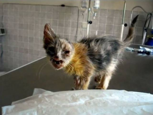 Scary Disfigured Cat That Nobody Wanted Got Saved By A Little Girl