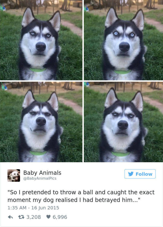 Some Of The Funniest Posts About Huskies For Your Enjoyment