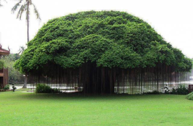 Beautiful Trees With Unusual Forms From Around The World