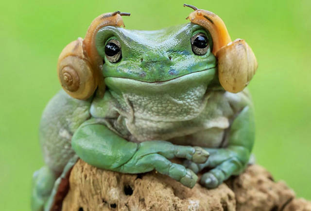 Hilarious Photoshop Battle Began After This Photo Of A Frog That Looks Like Princess Leia Appeared Online