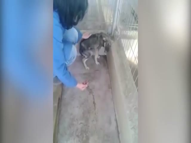 Reaction To A Caress Of A Dog That's Been Traumatized By Abuse