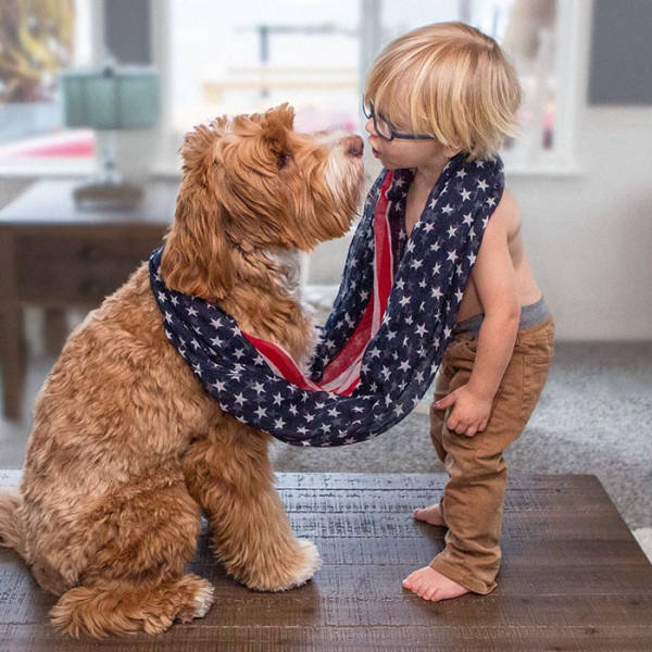 Adorable Labradoodle And A Boy Are Best Buds Who Do Everything Together