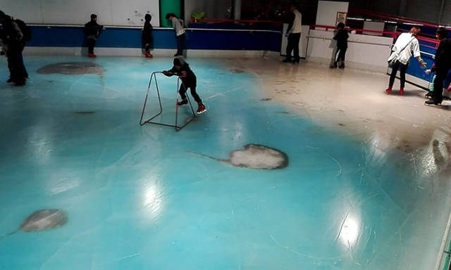 An Ice Skating Rink Thought It Was A Good Idea To Freeze 5,000 Dead Fish In The Ice
