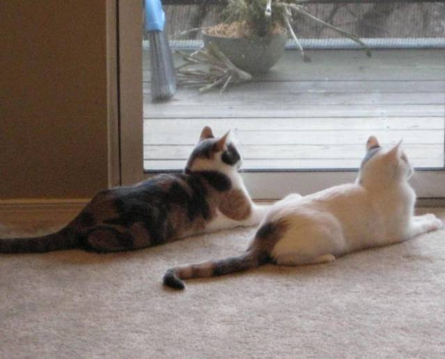 It's Unbelievable How These Cats Are Perfectly Synchronized