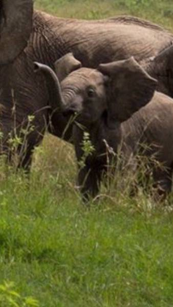 Why You Shouldn't Mess With Baby Elephants