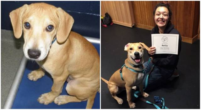 Animals' Transformation After They Were Adopted