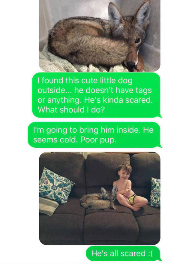 """Husband Totally Flips Out After His Wife Sent Him A Photo Of """"A Cute Puppy She Found Outside"""""""