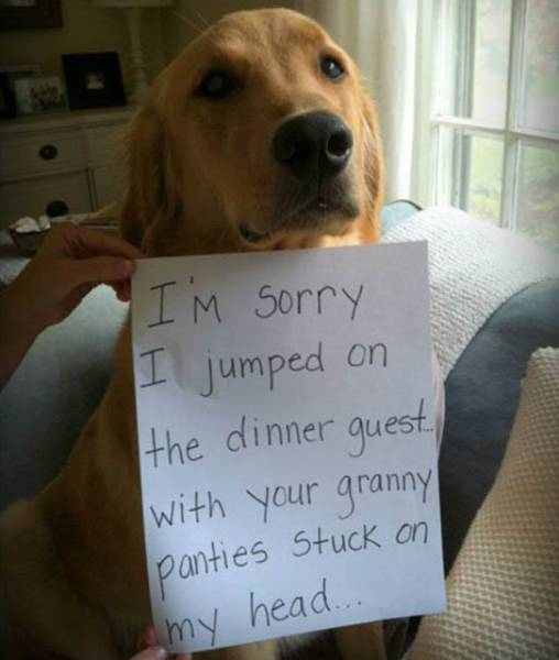The Ultimate Collection Of Funny Pet Shaming Pics