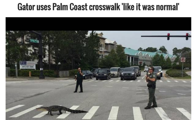 Florida Is A Special Place Where All Kind Of Weird Stuff Happens