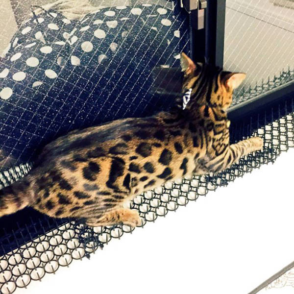 These Pictures Show That Cats Will Soon Be Able To Adapt Even To Nuclear Bomb Explosions
