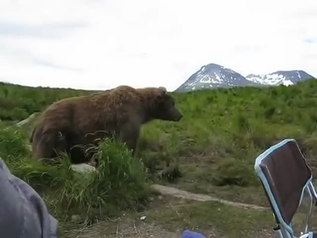 Bears Need To Chill Too, And No Puny Human Can Get In Their Way