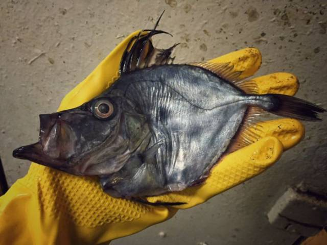 It's Hard To Believe These Fish Even Exist… And They Were Even Caught!