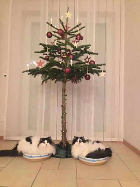 The Christmas Tree Is Surely Pet-Safe In These Homes