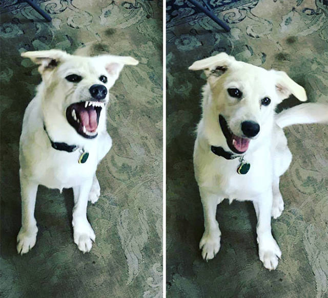"Your Pet's Reaction On You Calling It ""Good Boy/Girl"" Depends A Lot…"