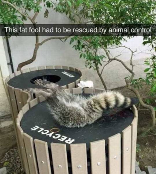 Daily Picdump