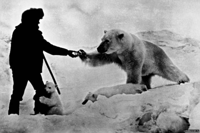 You Won't Believe Polar Explorers Could Get That Close To Polar Bears!