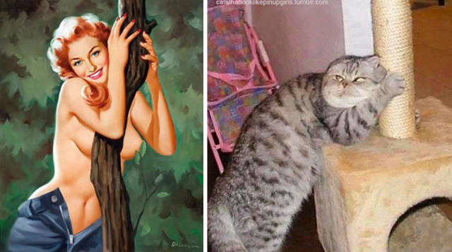 So That's Why Cats Are So Popular! Pinup Girls Have Got A Tough Competitor