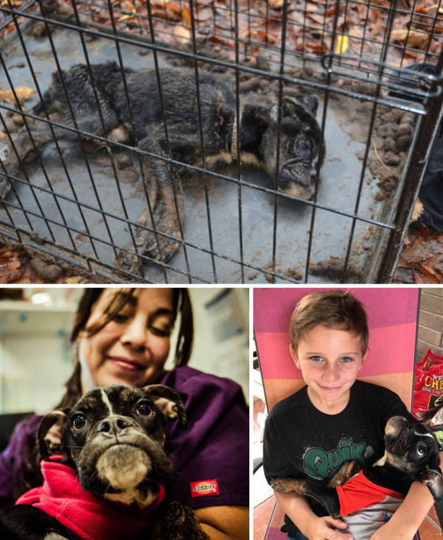 These Dogs Have Seen The Worst But Were Still Saved