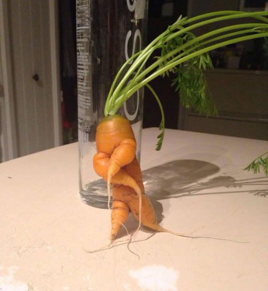 Sometimes Nature Takes Strange Forms