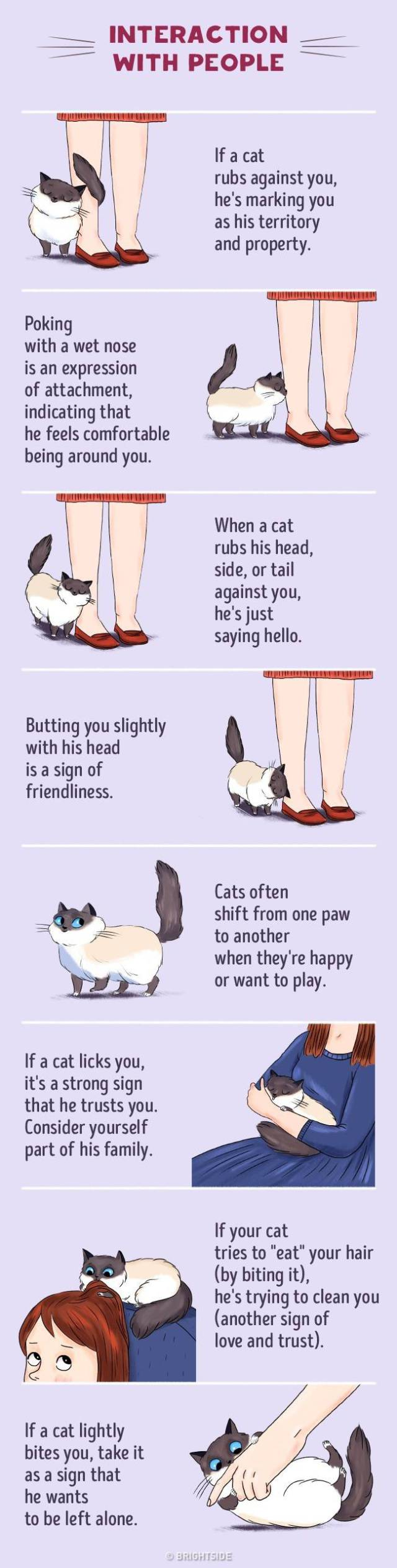 Here's How You Can Understand Your Cat Better