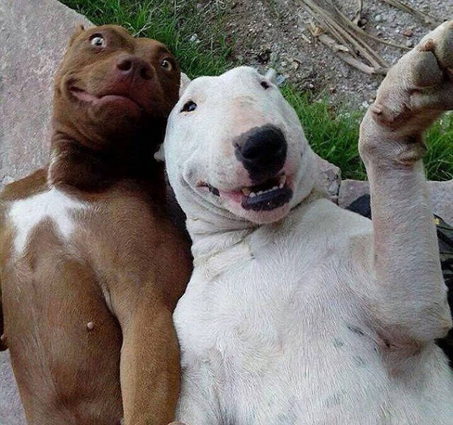 Selfie Virus Detected In Animals! They Look Better Than Humans Too…