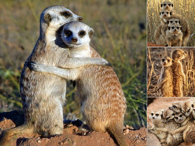 The Secret Of Sorority Girls' Photos Is Revealed And Appears To Be Hailing From The Animal Kingdom!
