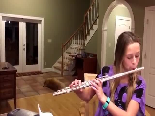 Dog Is Trying To Protect Himself From Classical Flute Attacks