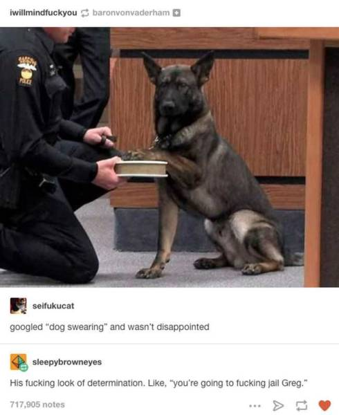 Sometimes Dogs